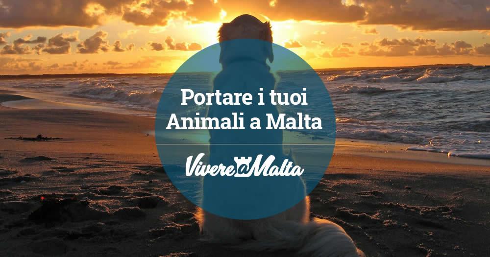 Portare animali a malta vivere a malta - Trovare casa a malta ...